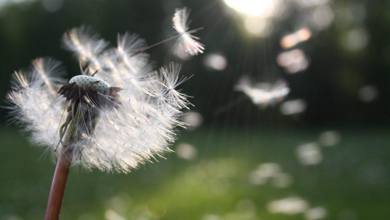 Te connais-tu vraiment ? Es-tu au clair ce que tu veux au plus profond de toi? Dans cet article, je t'invite à explorer la vie que tu désires vraiment.